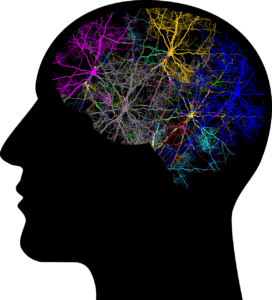 Neural network and human brain